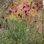 une fleur caractéristique