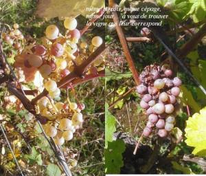 facile de trouver leur vigne d'origine